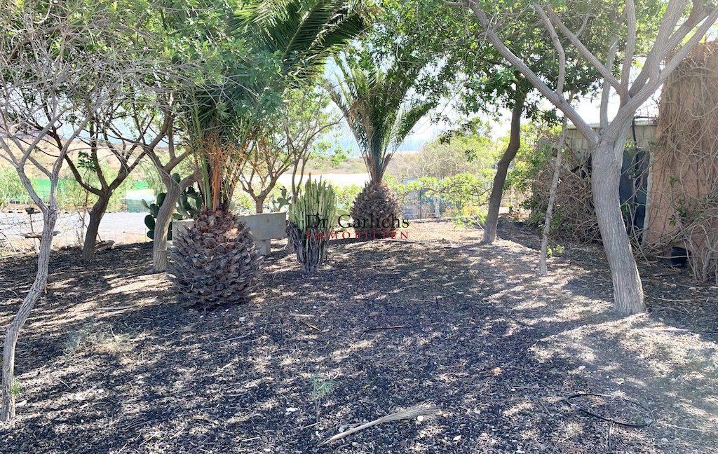 Granadilla de Abona - Teneriffa - Finca - ID 7651 - 23